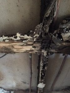 Termites Damage Robina Home