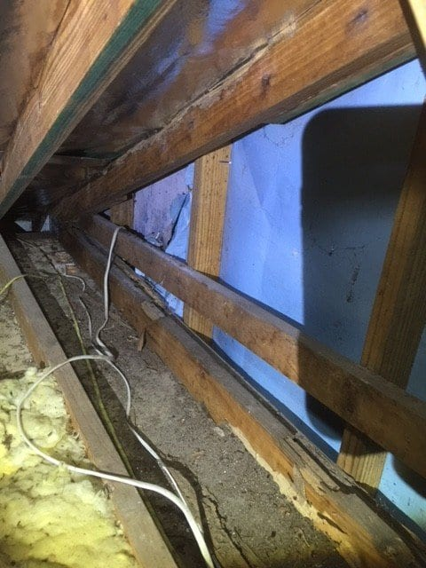 Building inspection locates termite damage in roof void mermaid waters