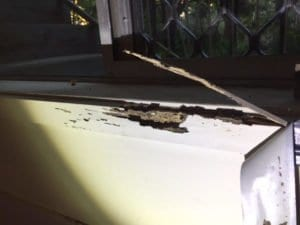 Termites (Coptotermes) Damage Window