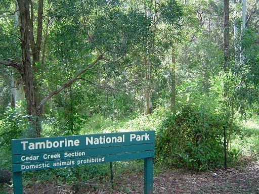 Cedar Creek Falls in Tamborine National Park