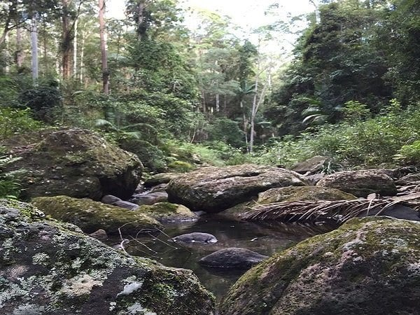Nerang River, Springbrook National Park, Gold Coast Hinterland, Queensland, Australia