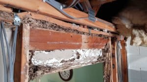 Termite Damaged Timbers